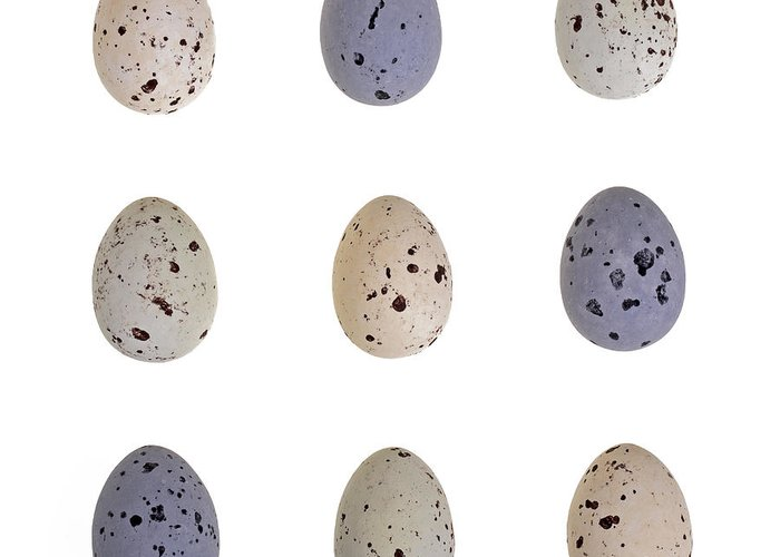 Taste Greeting Card featuring the photograph Speckled Egg Tic-tac-toe by Jane Rix