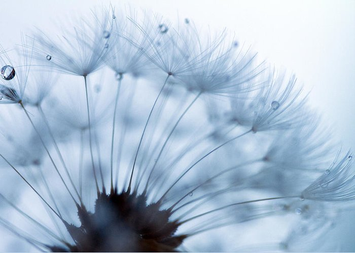 Dandelion Greeting Card featuring the photograph Spin Round And Round by Rebecca Cozart