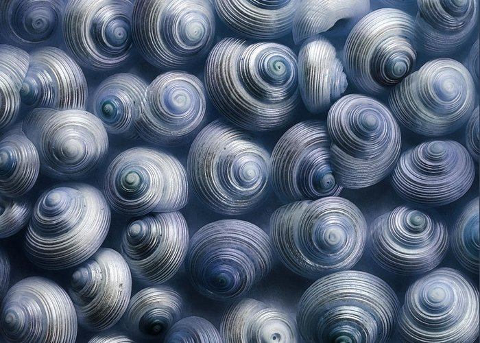 Snails Greeting Card featuring the photograph Spirals Blue by Priska Wettstein
