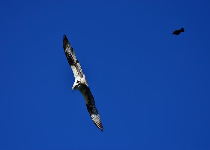 Osprey Greeting Card featuring the photograph Spitfire Vs Bomber by Dennis Blum