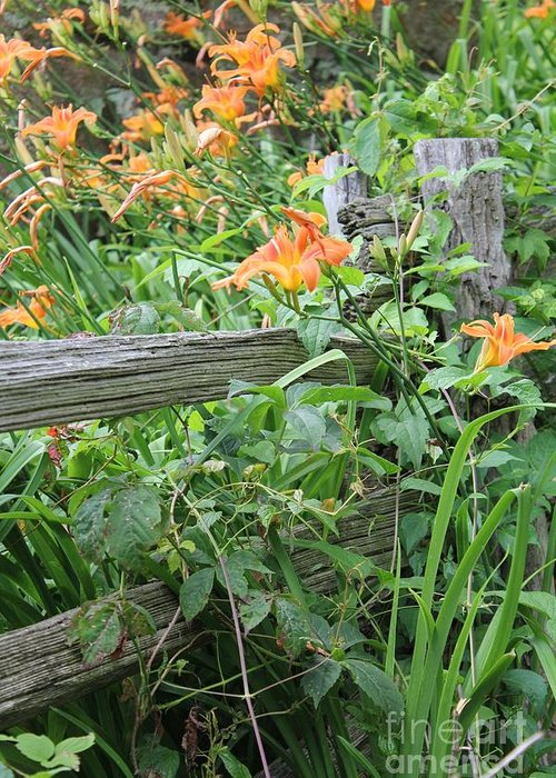 Lillies Greeting Card featuring the photograph Split Rail Fence by Laurinda Bowling