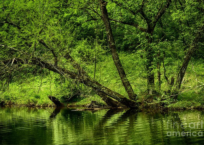 Spring Greeting Card featuring the photograph Spring Along West Fork River by Thomas R Fletcher