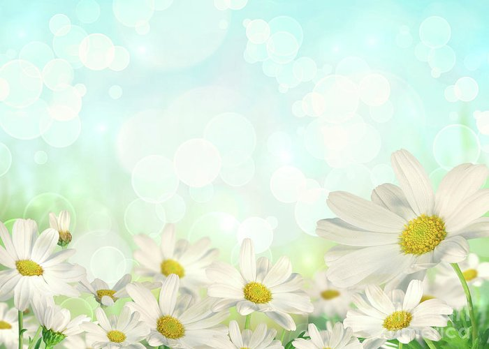 Abstract Greeting Card featuring the photograph Spring Background With Daisies by Sandra Cunningham