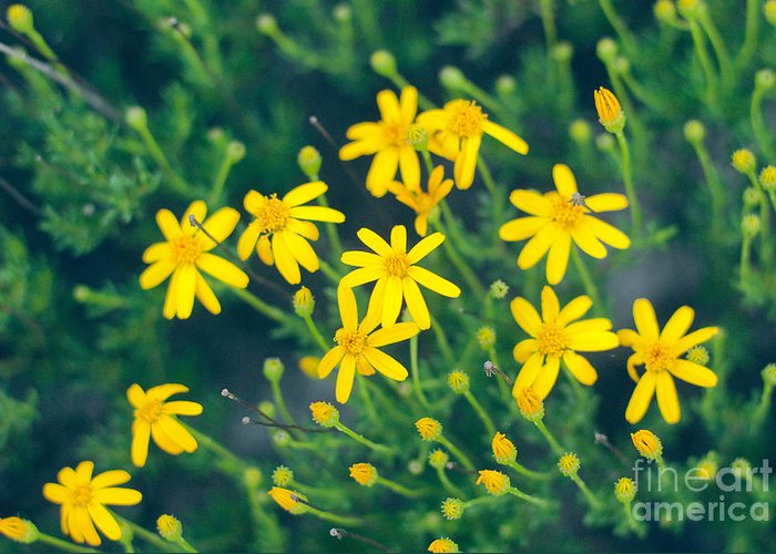 Yellow Greeting Card featuring the photograph Spring by Barbara Shallue