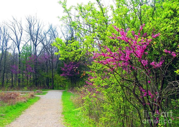 Trees Greeting Card featuring the photograph Spring Blooms Along The Path by Matthew Peek