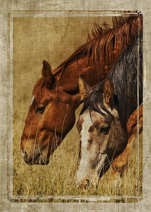 Spring Creek Basin Wild Horses Greeting Card featuring the photograph Spring Creek Basin Wild Horses by Priscilla Burgers
