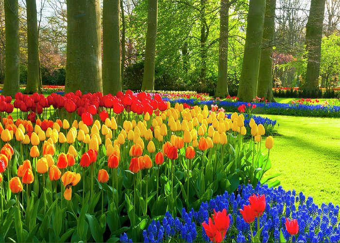Flowerbed Greeting Card featuring the photograph Spring Flowers In A Park by Jacobh
