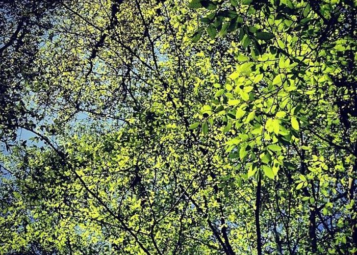 Nature Greeting Card featuring the photograph Spring Leaves by Nic Squirrell