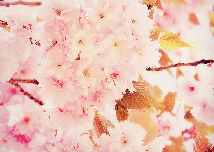 Cherry Blossoms Greeting Card featuring the photograph Spring Love by Angela Doelling AD DESIGN Photo and PhotoArt