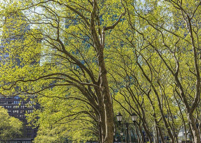 Bryant Park Greeting Card featuring the photograph Spring Time In Bryant Park New York by Angela A Stanton