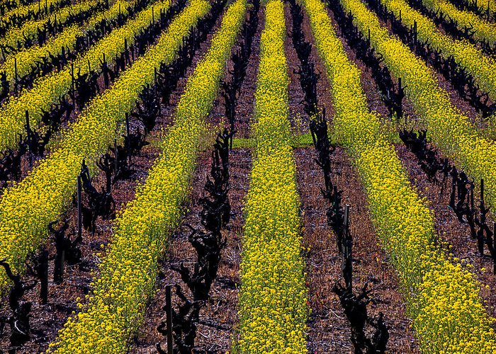Napa Greeting Card featuring the photograph Spring Vinyards by Garry Gay
