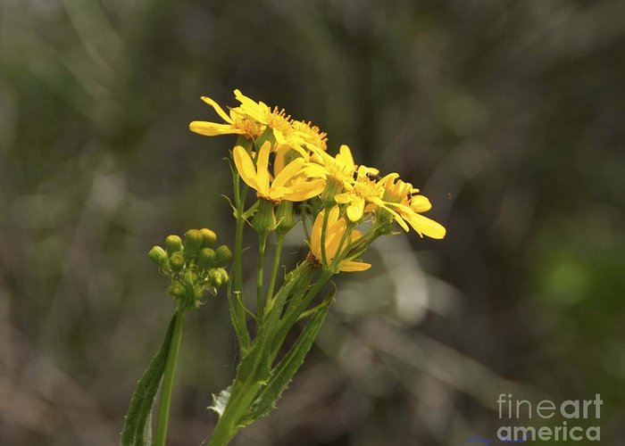 Flowers Greeting Card featuring the photograph Spring Wildflowers by Doug Farrell