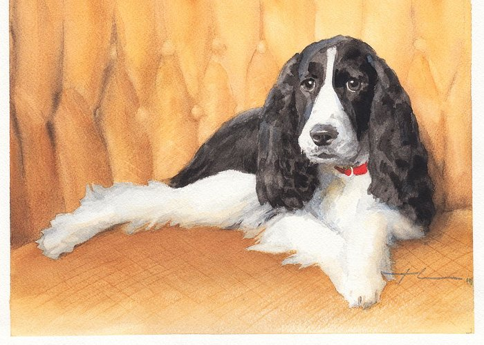 <a Href=http://miketheuer.com Target =_blank>www.miketheuer.com</a> Springer Spaniel Watercolor Portrait Greeting Card featuring the drawing Springer Spaniel Watercolor Portrait by Mike Theuer