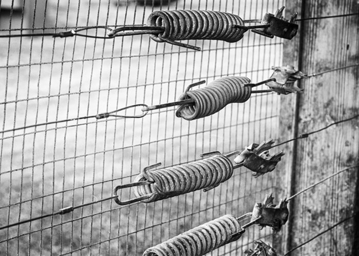 Aging Greeting Card featuring the photograph Springs On The Fence by Christi Kraft