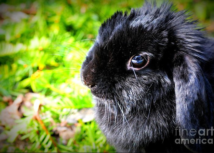 Spring Greeting Card featuring the photograph Springtime Bunny by Sophia Elisseeva