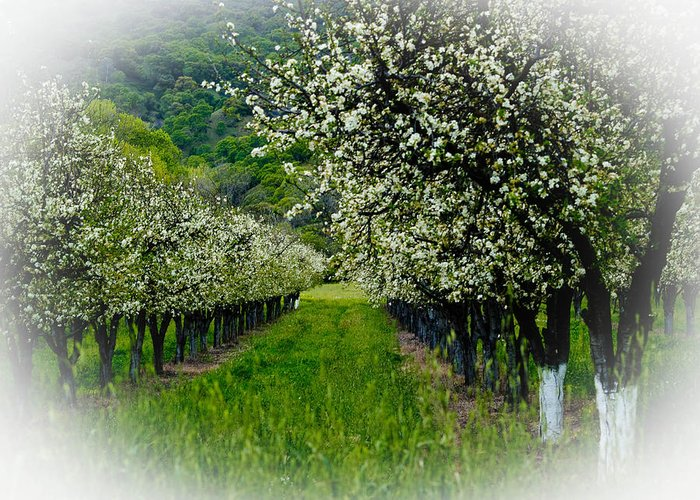 Agriculture Greeting Card featuring the photograph Springtime In The Orchard by Bill Gallagher