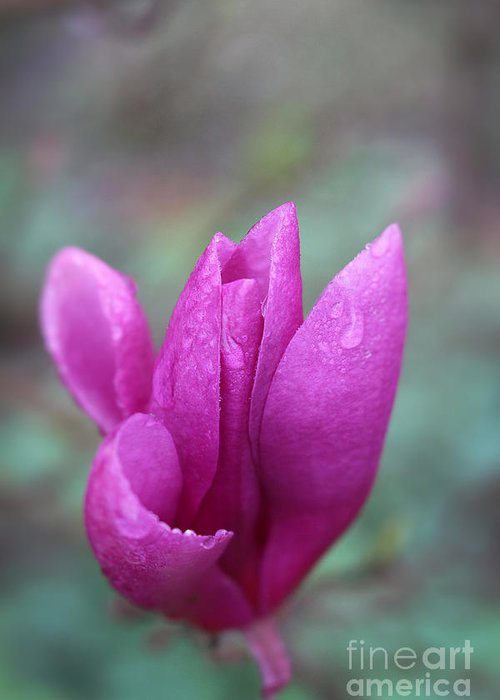 Magnolia Greeting Card featuring the photograph Springtime Magnolia Blossom by Ella Kaye Dickey
