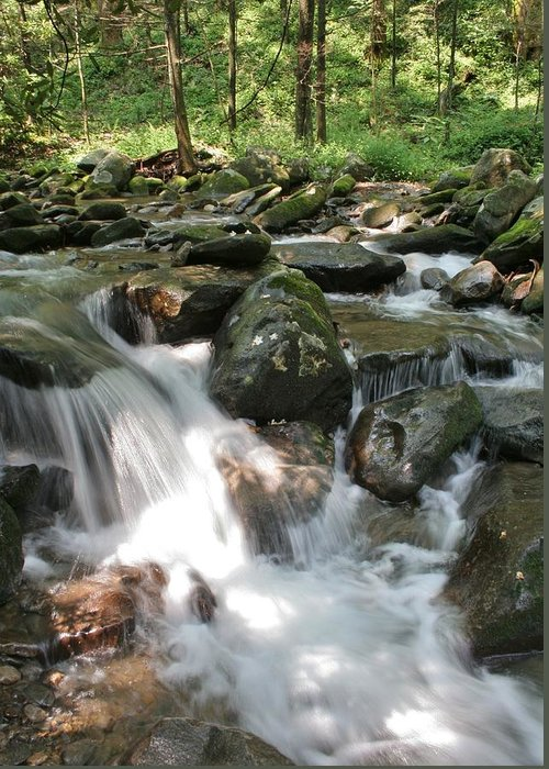 Smoky Mountains Greeting Card featuring the photograph Springtime Stream by Tammy Davis