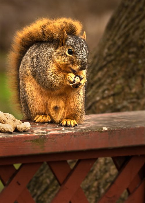 Eastern Fox Squirrel Greeting Card featuring the photograph Squirrel Eating A Peanut by Onyonet Photo Studios