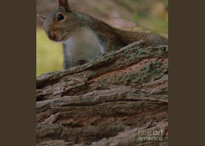 Squirrel Greeting Card featuring the photograph Squirrel by Kathleen Struckle