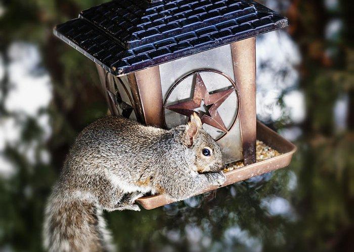 Squirrel Greeting Card featuring the photograph Squirrel On Bird Feeder by Elena Elisseeva