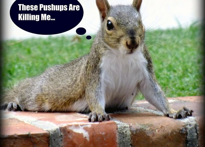 Gym Art Greeting Card featuring the photograph Squirrely Push Ups by Karen Wiles