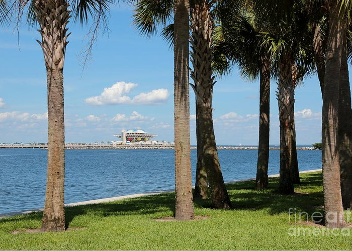 St Pete Greeting Card featuring the photograph St Pete Pier Through Palm Trees by Carol Groenen