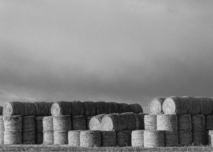 Hay Greeting Card featuring the photograph Stacked Round Hay Bales Bw Panorama by James BO Insogna