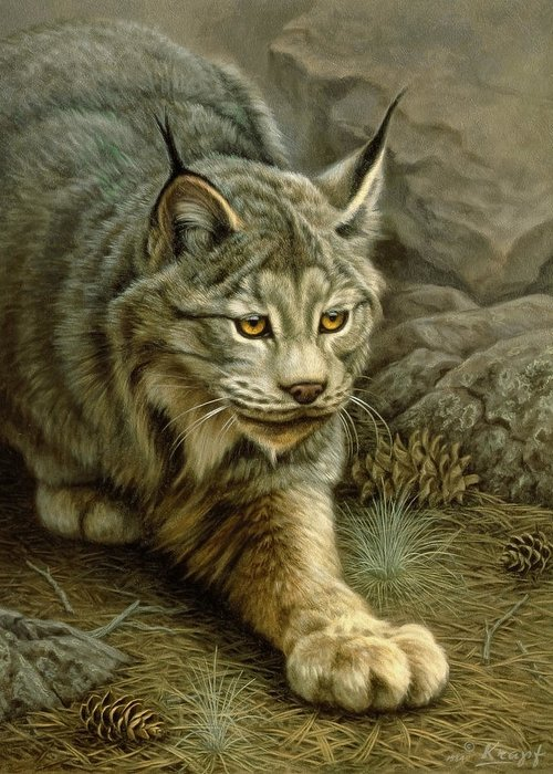 Lynx Paintings Greeting Cards