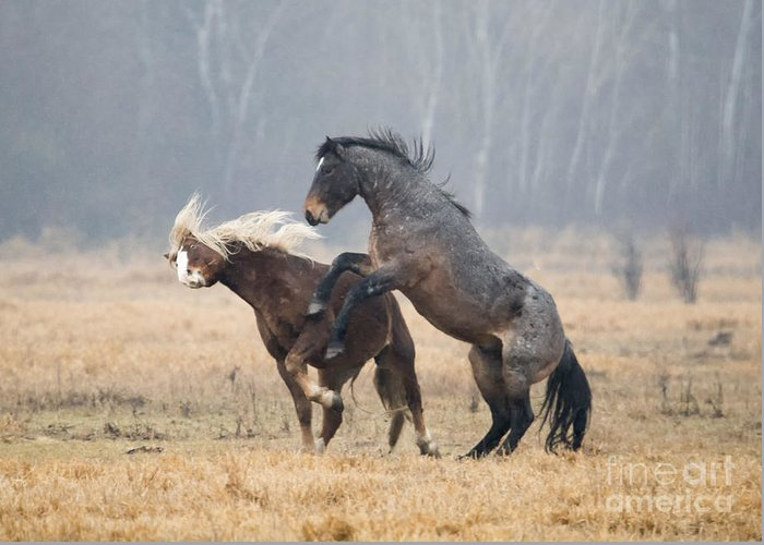 Stallion Greeting Card featuring the photograph Stallion Challenge by Mike Dawson