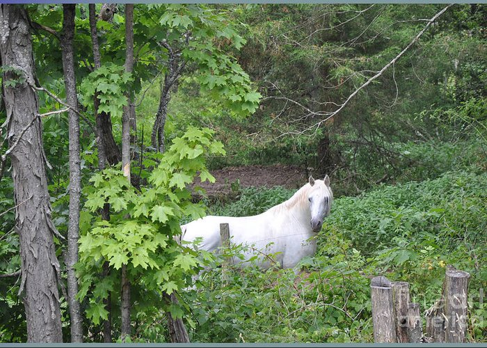 Stallion Greeting Card featuring the photograph Stallion On Independence Day by Patricia Keller