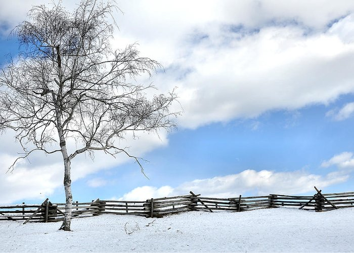 Tree Greeting Card featuring the photograph Standing Alone by Todd Hostetter