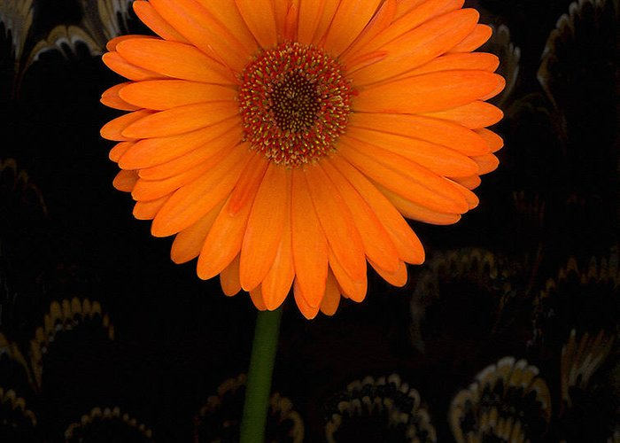 Gerbera Daisy Greeting Card featuring the photograph Standing Tall by Suzanne Gaff