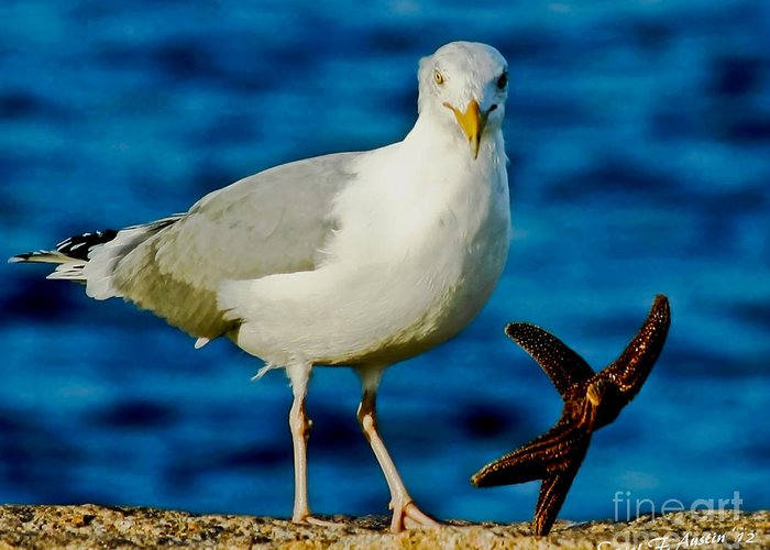 Seagull Greeting Card featuring the photograph Starfish And Seagull Dance On The Rocks by Carol F Austin