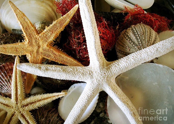 Starfish Greeting Card featuring the photograph Stars Of The Sea by Colleen Kammerer