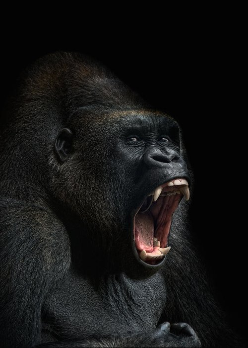Gorilla Photographs Greeting Cards