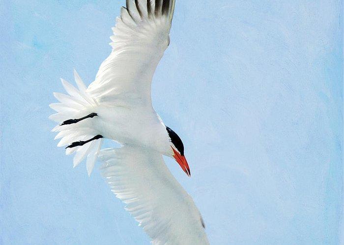 Royal Tern Greeting Card featuring the photograph Steep Tern by Fraida Gutovich