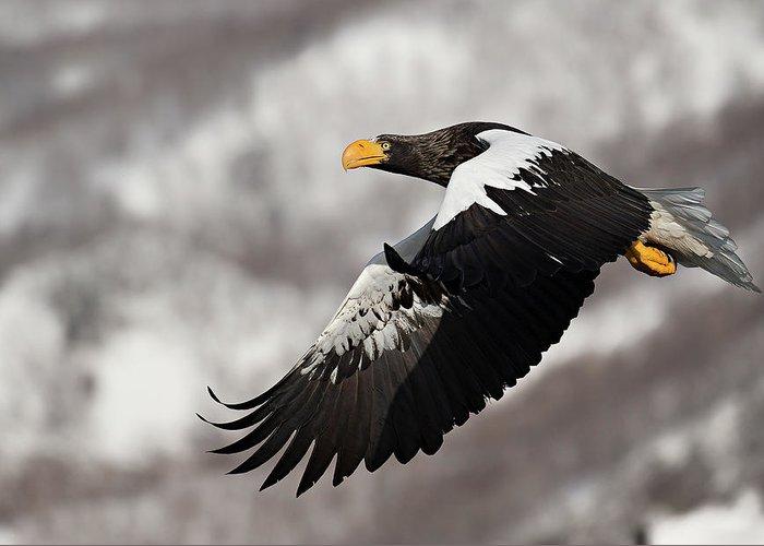 Flying eagle art fine art america flying eagle greeting cards altavistaventures Gallery