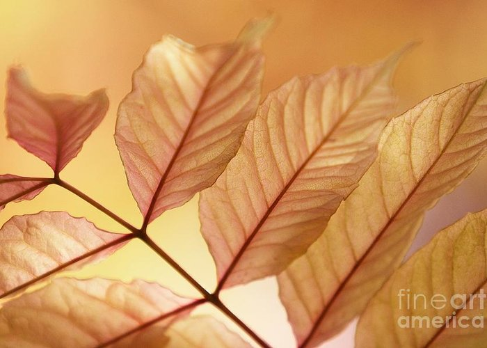 Leaves Greeting Card featuring the photograph Stems by Andrew Brooks