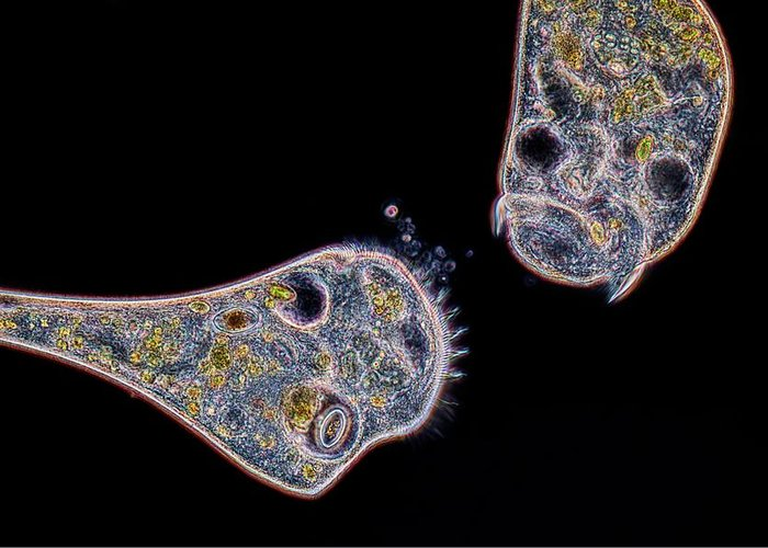 Dark Field Microscopy Greeting Cards