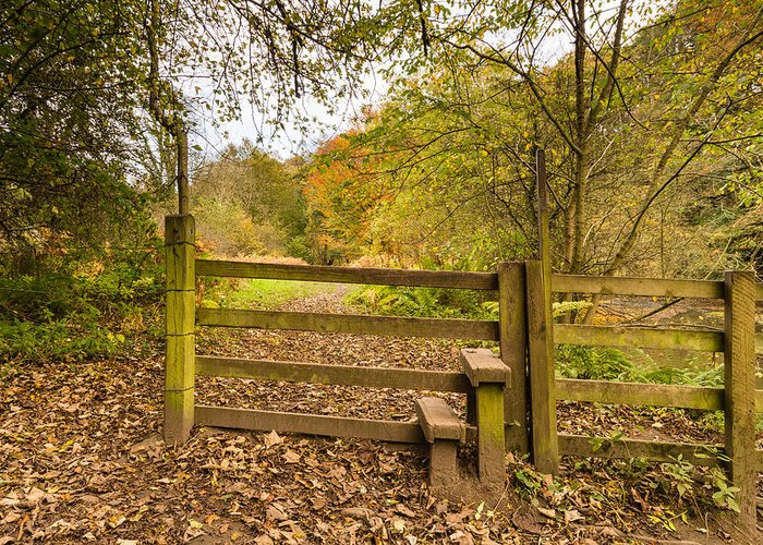 Northumberland Greeting Card featuring the photograph Stile In Plessey Woods by David Head