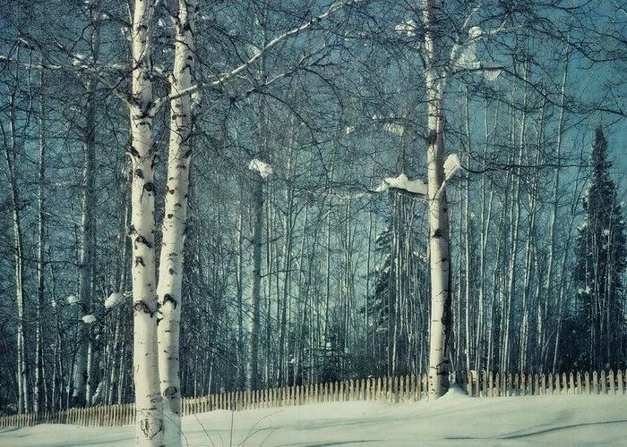 Winter Greeting Card featuring the photograph Still Winter by Priska Wettstein