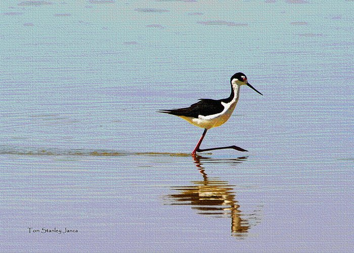 Stilt Out For A Stroll Greeting Card featuring the photograph Stilt Out For A Stroll by Tom Janca