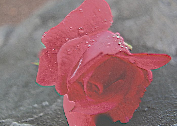 Stone Cold Rose Greeting Card featuring the photograph Stone Cold Rose by Debra   Vatalaro