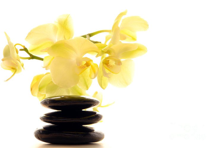 Aromatherapy Greeting Card featuring the photograph Stones And Orchid by Olivier Le Queinec