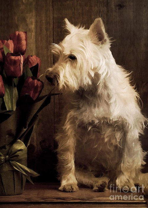Flower Flowers Dog Westie West Highland White Terrier Painting Pet Cute Adorable Sweet Smell Smelling Relax Portrait Ear Nose Best Seller Bestseller Portrait Nature Animal Studio Rose Red Greeting Card featuring the photograph Stop And Smell The Flowers by Edward Fielding