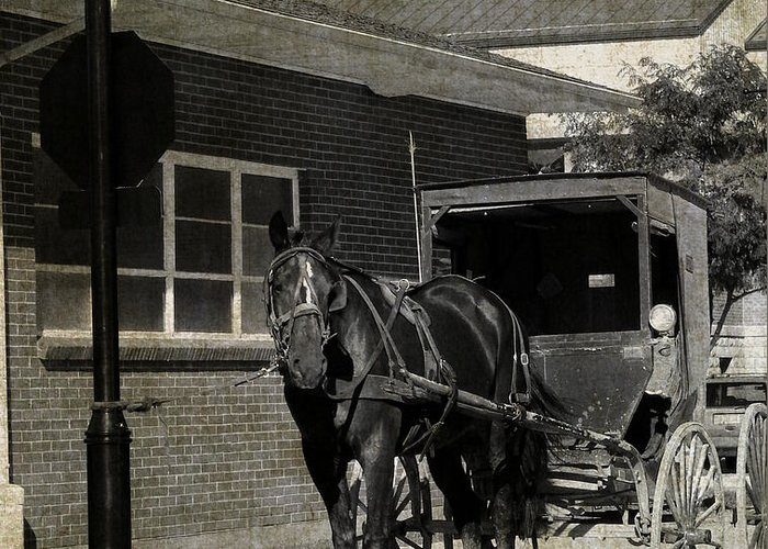Amish Greeting Card featuring the photograph Stopped For A Spell In Sepia by Cassie Peters