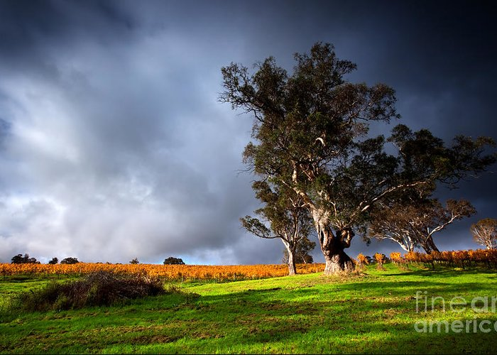 Strong Greeting Card featuring the photograph Storm Onto A Vineyard by Boon Mee