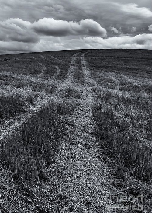 Tracks Greeting Card featuring the photograph Storm Tracks by Mike Dawson