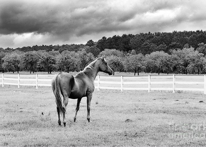 Hansen Greeting Card featuring the photograph Stormy Pasture by Scott Hansen